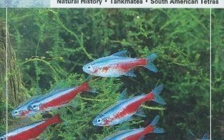 The Guide to OWNING TETRAS. Tetrat.Spencer Glass Sid.