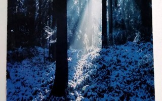 Within The ancient forest, Andrew Tompkins 1996
