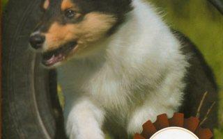 KOIRIEN HYVINVOINTI(16596)-FI-DVD, koirien käytöskoulu