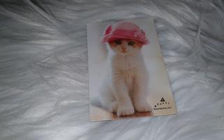 Suloinen Kissa Magneetti