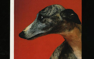 WHIPPETS Hardcover by Christine Cormany  UUSI