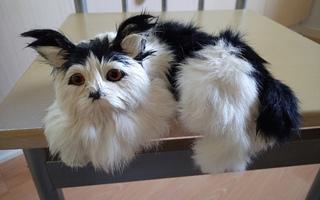 Karvaeläin / Kissa